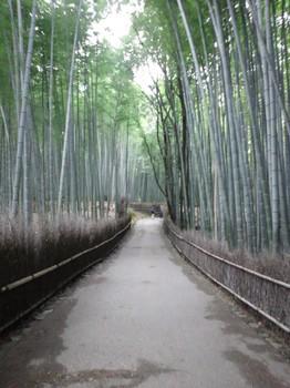 嵐山の竹林の道.JPG